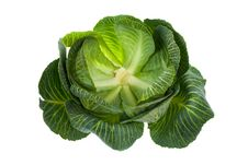 Free Cabbage Isolated On White Stock Photography - 8703672