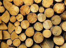 Tree Felling Stock Photography