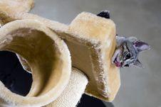 Free Small Kitten Stock Photography - 8705642