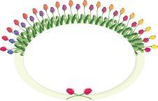 Free Tulip Circle Plaque Stock Image - 8705751