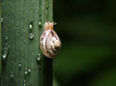 Free Snail Stock Photo - 8706260