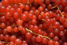 Free Currants Stock Images - 8706474