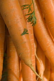 Free Carrots Royalty Free Stock Photography - 8706907