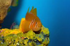 Free Cute Orange Fish Royalty Free Stock Photo - 8708255