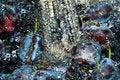 Free Washing Plums Royalty Free Stock Image - 8714666