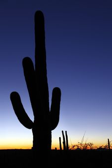 Clear Sky Saguaro Sunset Vertical Royalty Free Stock Image