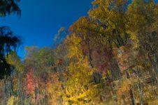 Free Tree Reflection Stock Image - 8715501