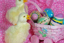 Free Easter Ducks Stock Image - 8717301