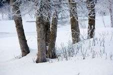 Free Dead Trees During Winter Stock Photos - 8717993