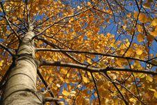 Free Autumn Tints Stock Images - 8718094