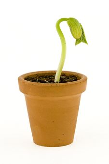 Free New Life Growing Stock Photography - 8724302