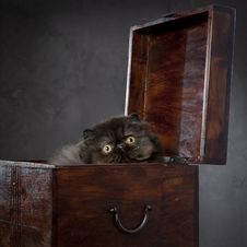 Long Haired Persian Cat In The Wooden Box Stock Photo
