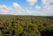 Free Pine Forest Treetops Stock Image - 8724871