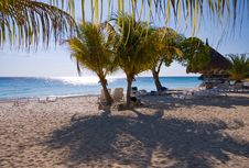 Free Nice Beach Scene With Palm Trees Royalty Free Stock Photo - 8724905