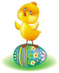 Free Little Yellow Chicken Stock Photo - 8727820