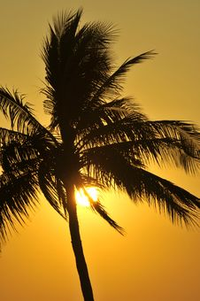 Free Palm Tree Sunset Royalty Free Stock Images - 8728829