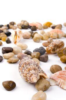 Free Sea Shells Stock Photos - 8728913