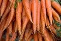 Free Market Carrots Royalty Free Stock Photos - 8735358