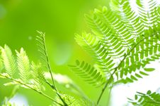 Free Green Leaf Background Stock Photos - 8730293