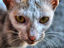 Free Cat S Eyes Stock Photo - 8731820