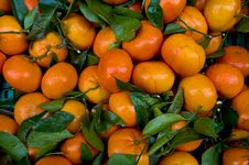 Free Mandarins Royalty Free Stock Photos - 8735368