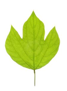 Free Leaf Stock Photos - 8735783
