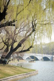 Free Willows Beside Bridge Stock Photo - 8736550