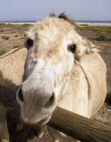 Free Angry Donkey Stock Images - 8737654