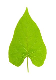 Free Leaf Stock Photography - 8738162