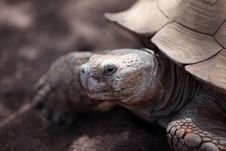 Free Turtle Stock Photography - 8739772