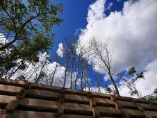 Free Cloud, Sky, Plant, Azure Stock Photo - 87312010