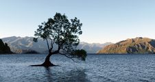 Free &x22;The Tree&x22; Lake Wanaka. NZ Stock Photo - 87312440