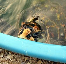 Free Turtle Stock Photography - 87312712