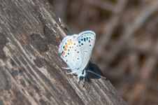 Free Silver Studded Blue Butterfly Stock Images - 87313414