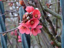Free Tiny Wonders Of Spring Stock Photos - 87313863