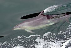 Free Dolphin At Play Stock Photos - 87314083