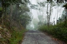 Free Path In Forest Stock Photo - 87318770