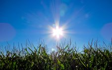Free Sun Shining Over Grass Stock Images - 87319784