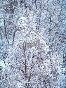 Free Background Of Snow Covered Trees Stock Photography - 87319802