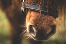 Free Close-up Of Horse Nose Stock Photography - 87319842