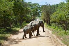 Free Elephant Walking Stock Photography - 87321002