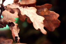 Free Close-up View Of Dry Leaves Stock Photos - 87321193