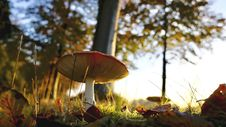 Free Close-up Of Mushroom Growing On Field Stock Image - 87321251