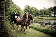 Free Horses In Park Royalty Free Stock Photography - 87321337
