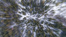 Free Evergreen Forest In Winter Royalty Free Stock Images - 87321699