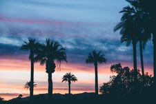 Free Silhouette Of Palm Trees Under Dark Clouds During Orange Sunset Stock Photo - 87322600