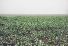Free New Crops Stock Photos - 87323003