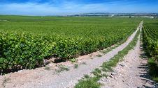 Free Moët & Chandon Vineyards In Verzenay, Champagne, France Stock Photography - 87379482