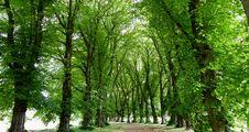 Free Tree Lined Avenue. Stock Photo - 87379770