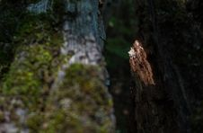 Free Light Finds A Way. Stock Image - 87379831